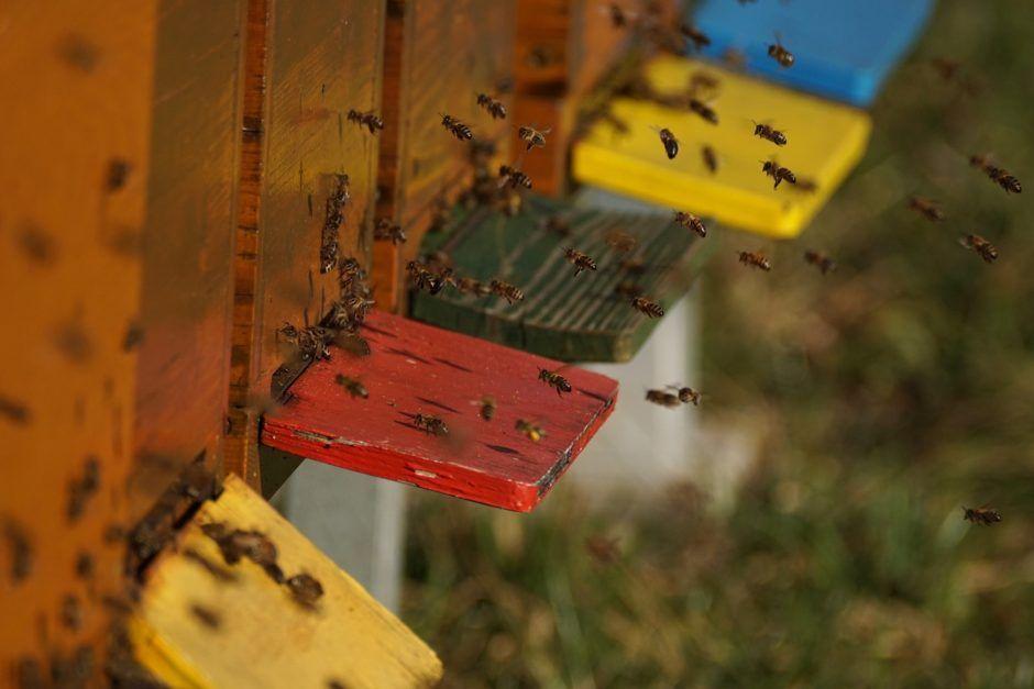 Fleißige Bienen bei der Arbeit